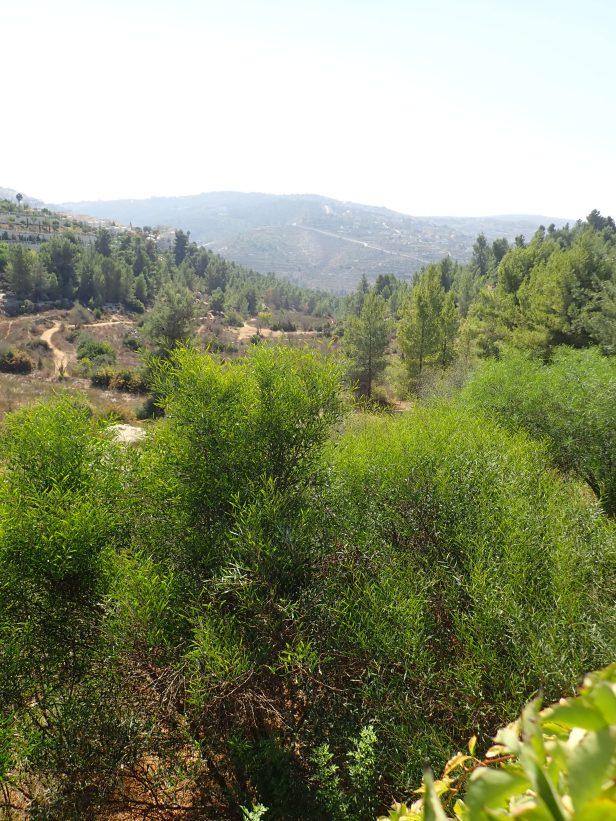 Emek Halavan White Valley, Jerusalem