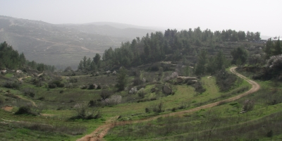 Save Jerusalem's Mountains JNF Forest Emek Ha'lavan