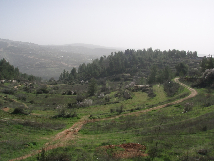 Save Jerusalem's Mountains JNF Forest Emek Ha'lavan